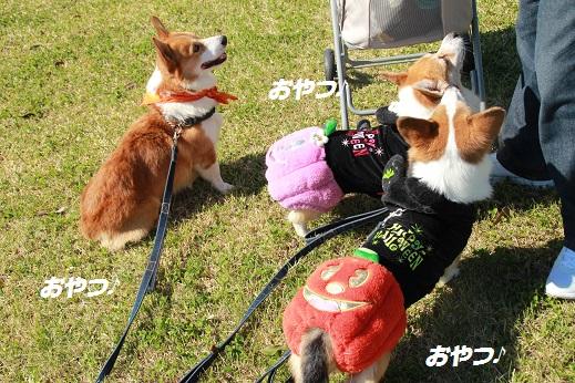 吉野ヶ里遺跡その2 2014-10-18-7