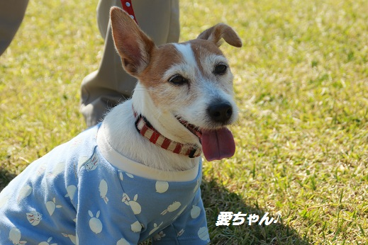 吉野ヶ里遺跡その1 2014-10-19-7