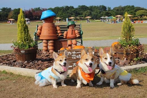 海中4 2014-10-26-11