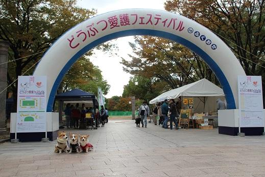 どうぶつ愛護フェスティバル 2014-11-3-1