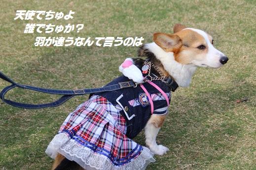 天神中央公園1 2014-11-3-1