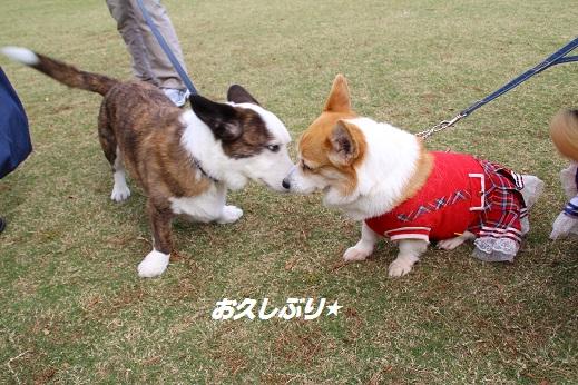 天神中央公園1 2014-11-3-5