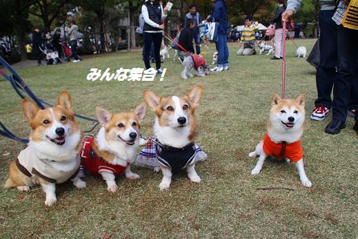 天神中央公園1 2014-11-3-7