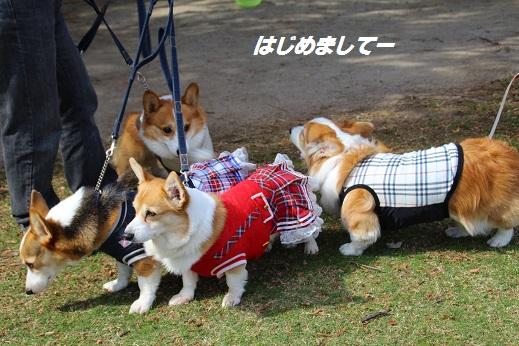 天神中央公園1 2014-11-3-11