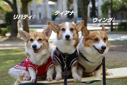 天神中央公園2 2014-11-3-1