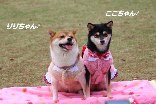 天神中央公園2 2014-11-3-5