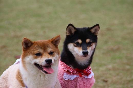 天神中央公園2 2014-11-3-6