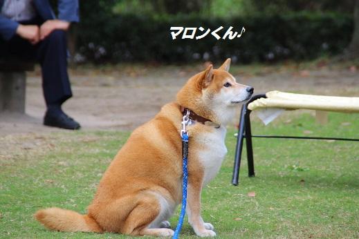 天神中央公園2 2014-11-3-7