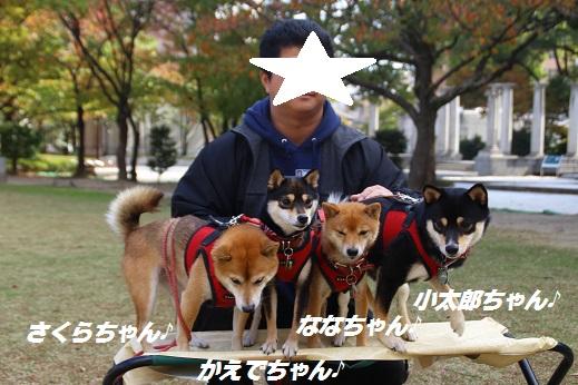 天神中央公園2 2014-11-3-10