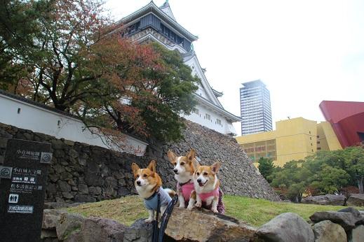 小倉散歩 2014-11-8-5