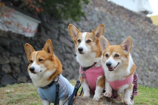小倉散歩 2014-11-8-6