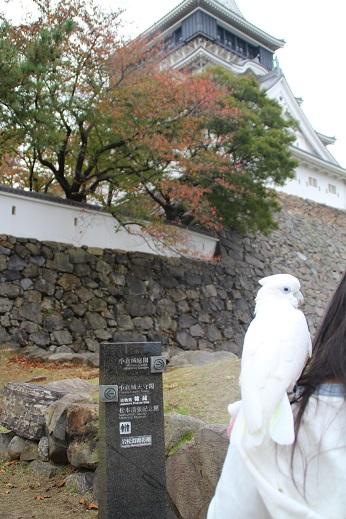 小倉散歩 2014-11-8-7