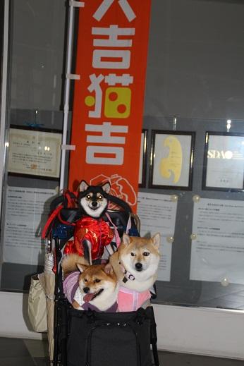 ドッグショー 2014-11-9-9