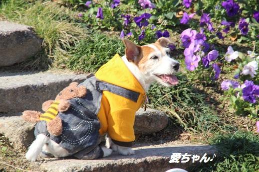 かしいかえん 撮影編 2014-11-15-2