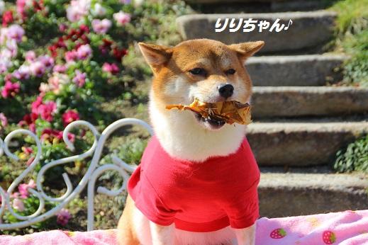 かしいかえん 撮影編 2014-11-15-3