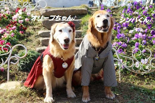 かしいかえん 撮影編 2014-11-15-8