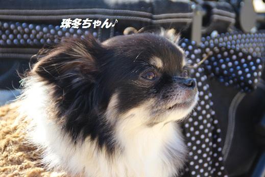 かしいかえん 探索編 2014-11-15-3