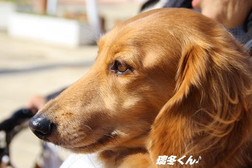かしいかえん 探索編 2014-11-15-4