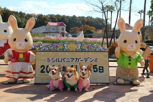 かしいかえん 探索編 2014-11-15-6