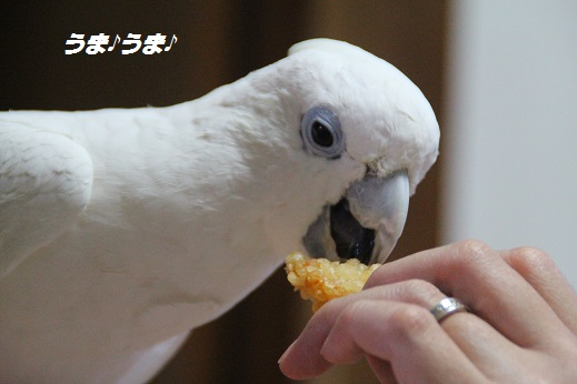 かしいかえん 探索編 2014-11-15-14