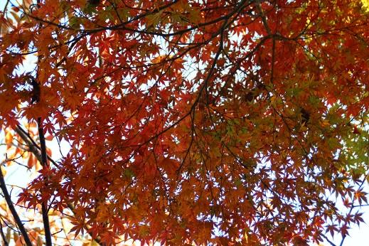 小倉に寄り道 2014-11-15-5
