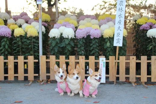小倉に寄り道2014-11-15-7