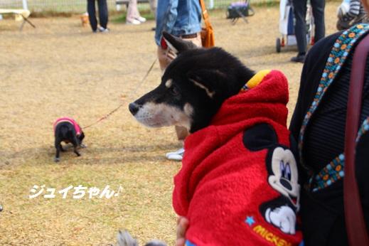 久山 2014-11-23-1