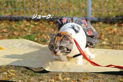 久山 2014-11-23-5