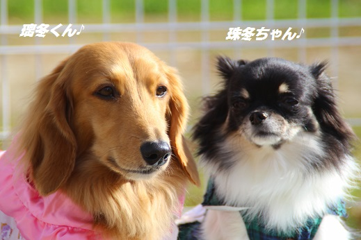 久山 2014-11-23-9