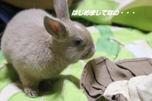 真琴ちゃん 2014-11-24-1