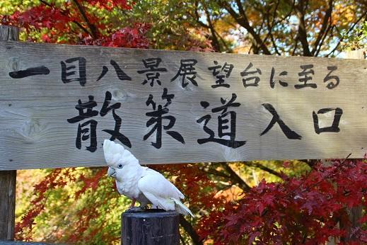 探索道入口 2014-11-19-1
