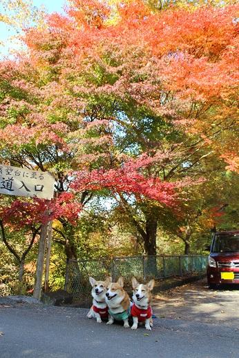 探索道入口 2014-11-19-2