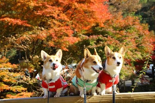 探索道入口 2014-11-19-5