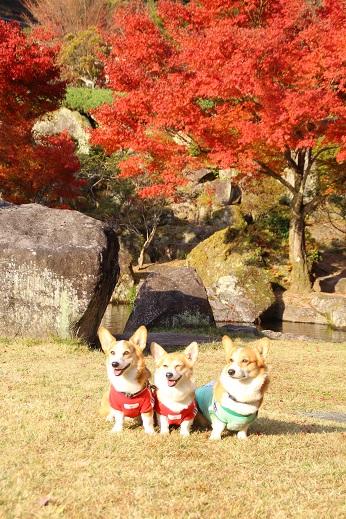渓石園1 2014-11-19-3
