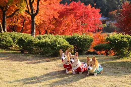 渓石園1 2014-11-19-8
