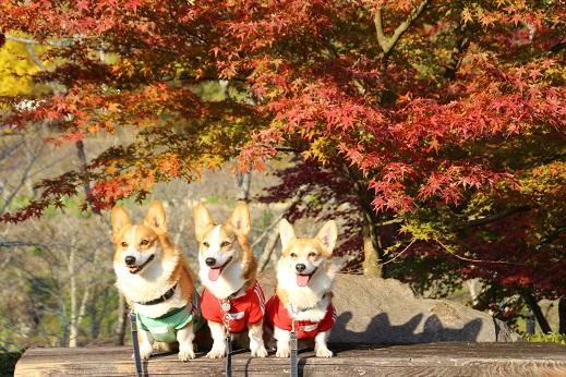 渓石園1 2014-11-19-9
