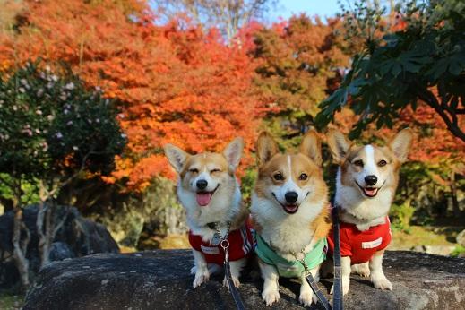 渓石園2 2014-11-19-1