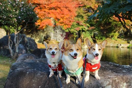 渓石園2 2014-11-19-3