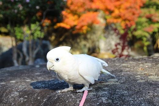 渓石園2 2014-11-19-4
