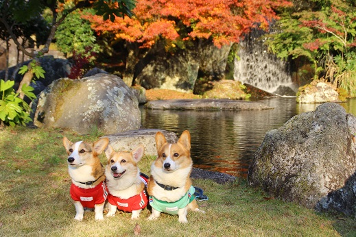 渓石園2 2014-11-19-5