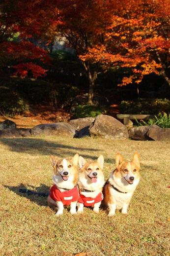 渓石園2 2014-11-19-9