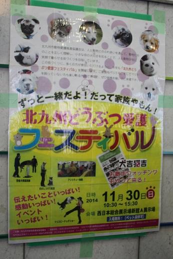 どうぶつ愛護フェスティバル 2014-11-30-1