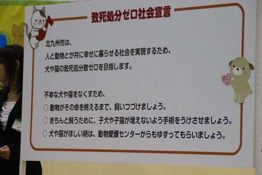 どうぶつ愛護フェスティバル 2014-11-30-2