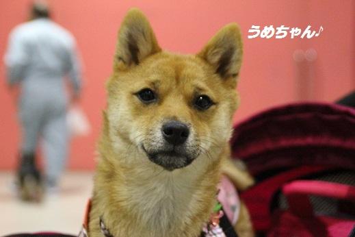 どうぶつ愛護フェスティバル 2014-11-30-4