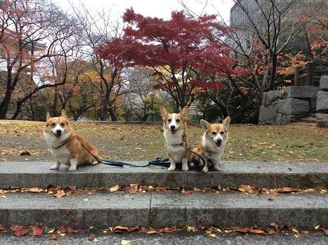 小倉城 2014-11-28-5