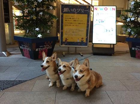 小倉城 2014-11-28-9
