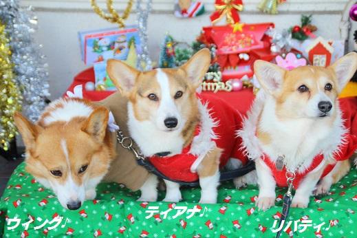 ゆめタウン1 2014-12-14-7