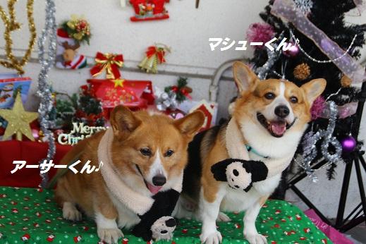ゆめタウン1 2014-12-14-8