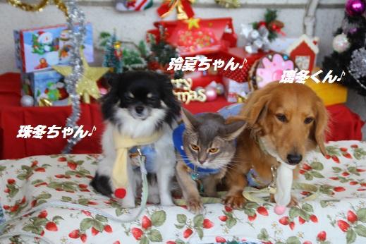 ゆめタウン1 2014-12-14-9