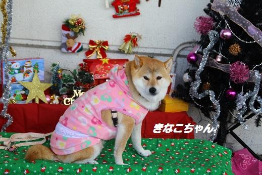 ゆめタウン1 2014-12-14-11